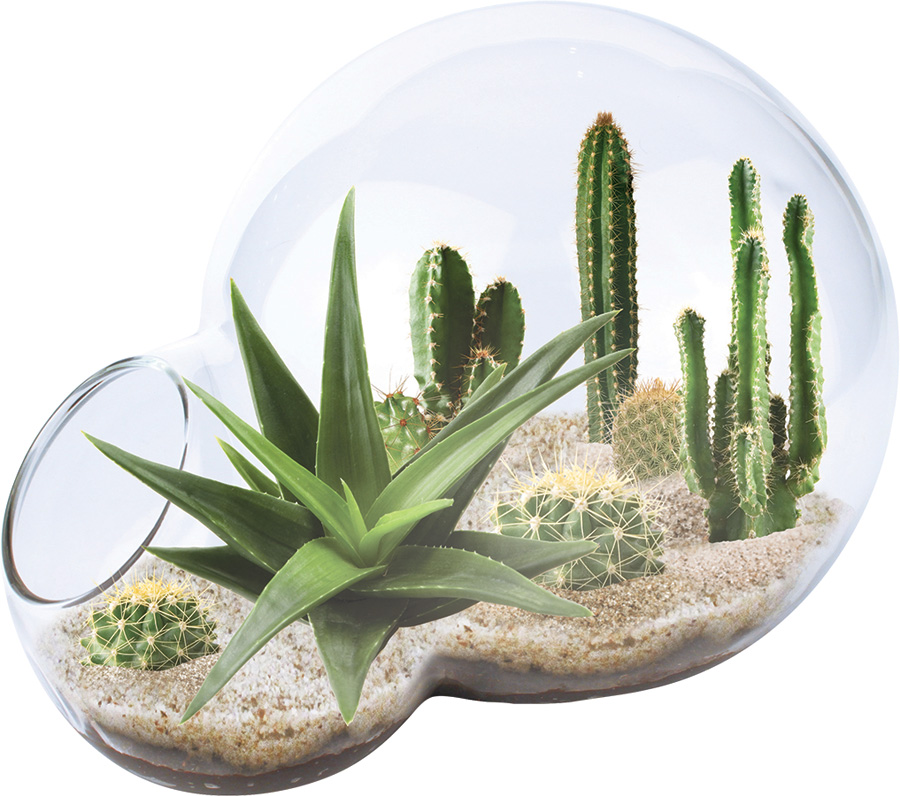 Desert Oasis Double Bubble Terrarium - Fat Brain Toys